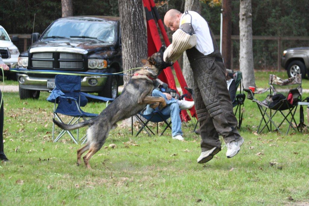 Obi Shitzhund Competition